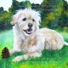 Terrier mit Tannenzapfen