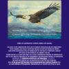 Weißkopfseeadler blau